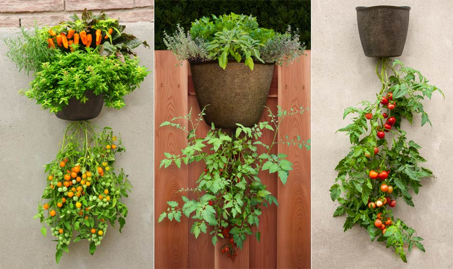How To Grow Vegetables And Fruits In A Hanging Basket If