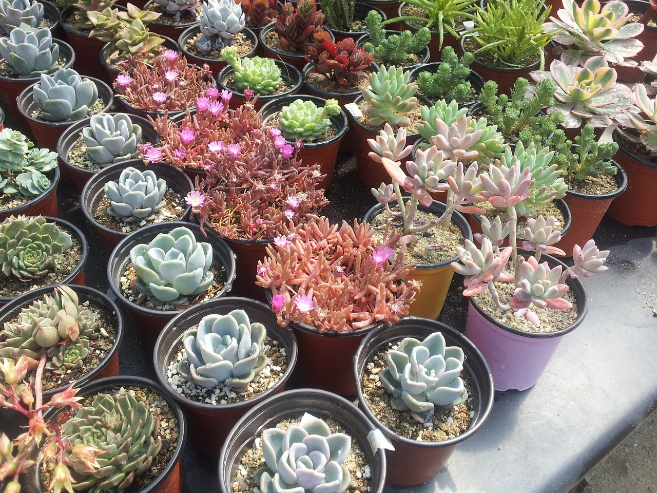 tips for growing healthy succulents the plant guide. Black Bedroom Furniture Sets. Home Design Ideas