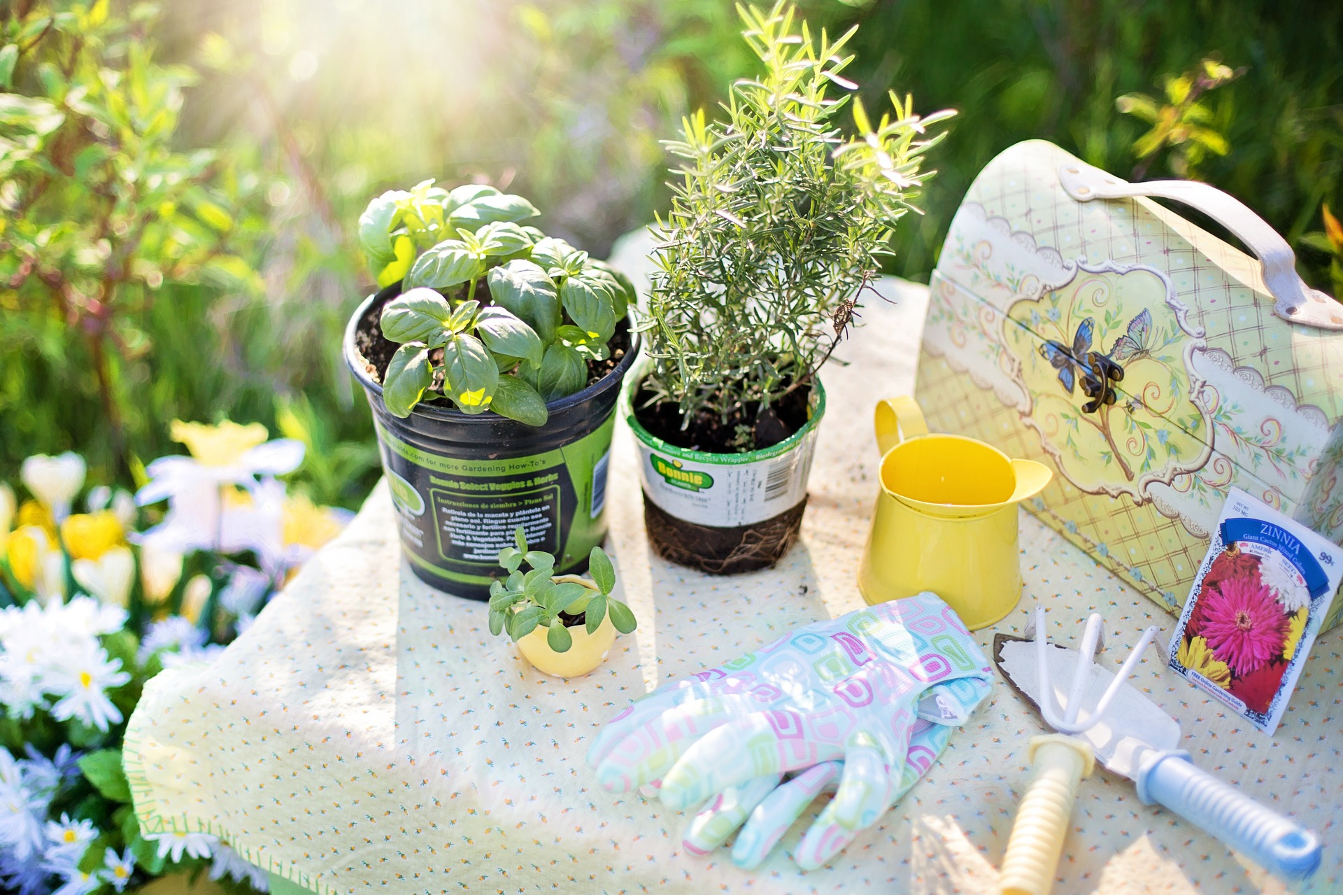 Top summer gardening tips the plant guide - Summer time gardening tips ...