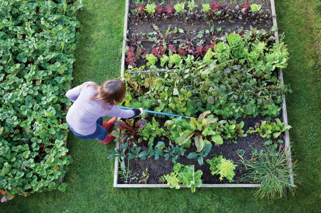 how to get rid of weeds before planting vegetable garden