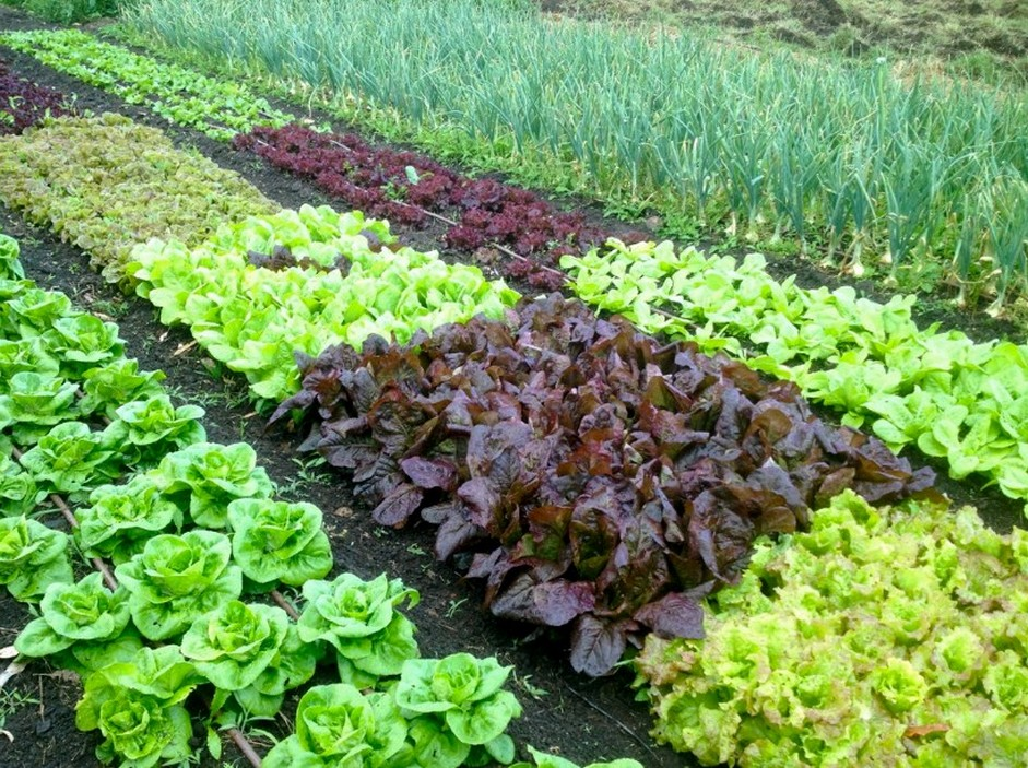 5 Tips To Help Your Garden Thrive During A Drought The Plant Guide