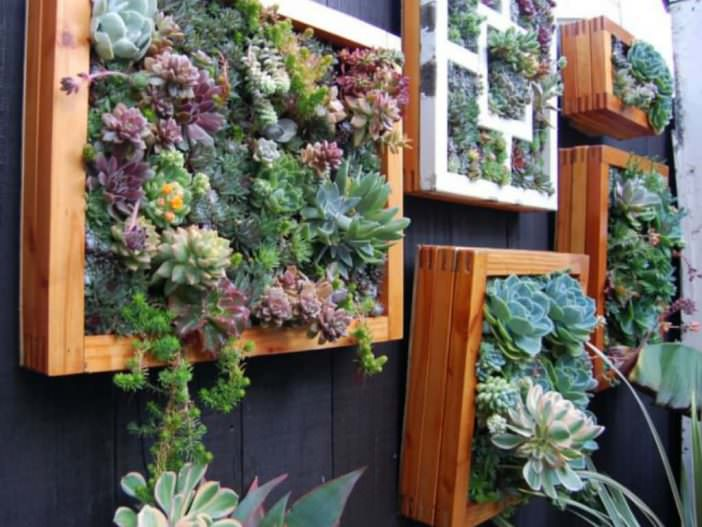 How To Create A Vertical Succulent Garden The Plant Guide